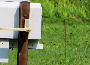 Bees Up Close