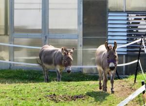 Speaking Of Donkeys...