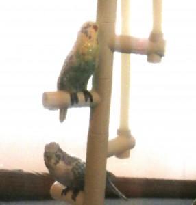 Perching Llandro Birds