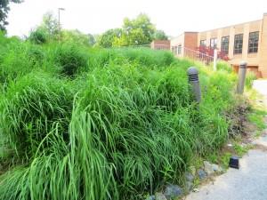 Erosion Control Plantings